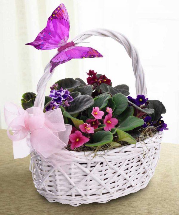 سبد گل زیبای طبیعی بنفشه آفریقایی