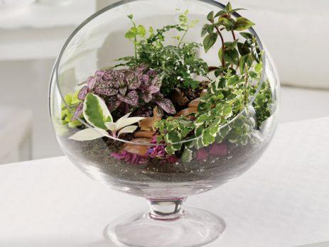 گلدان شیشه ای باغ کوچک جام پایه دار مخصوص ساخت تراریوم و دیش گاردن زیبا