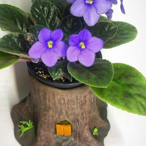گلدان بنفشه آفریقایی در طرح فانتزی تنه درخت لی لی پوت با نگهداری اسان برای هدیه