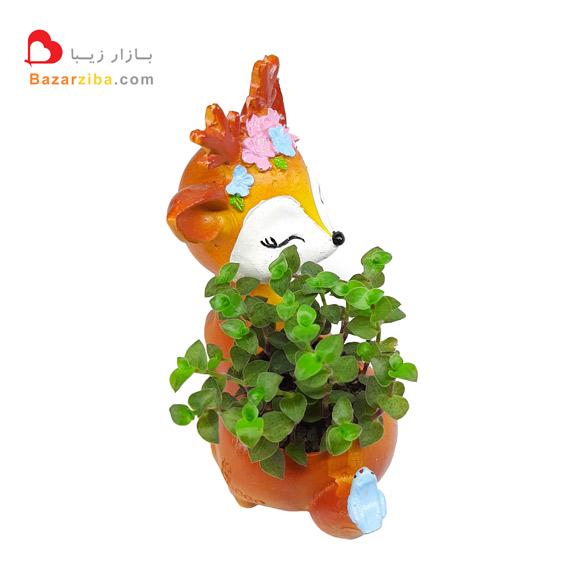 خرید گلدان فانتزی مدل آهو با گیاه آپارتمانی چمن عروس مدل کالیسیا در گلدانی خاص کوچک تزیینی و پلاستیکی با قیمت مناسب آنلاین