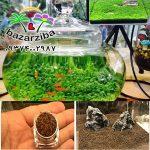 bazarziba-plants-seed