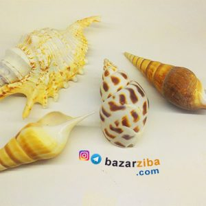 صدف دریایی و گوش ماهی دکوری