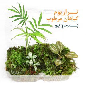 گیاه مخصوص تراریوم