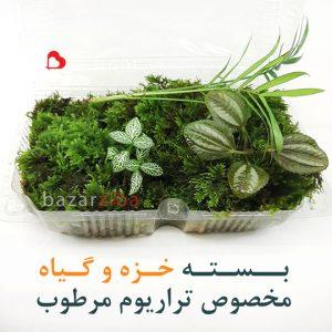 بسته خزه و گیاه مخصوص تراریوم