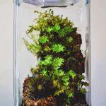 umbrella-moss-terrarium