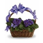 violets_and_butterflies_1